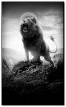 lion 240x400