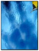 Pez fondo azul