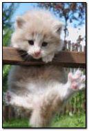 Biały kot 2