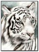 Tigri bianche