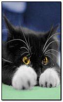 Солодкий кот