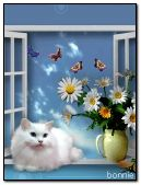 White cat and butterflies
