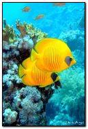 ปลา Tropic