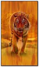 Tigre del fuoco