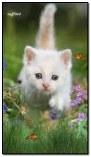 Kitten và bướm