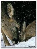 Deer Bunny Kiss