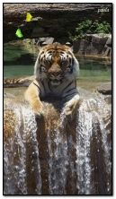 tiger and waterfall