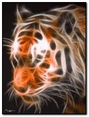 ashley tiger