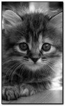 Дитячий кот