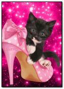 Mèo con dễ thương