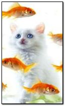 Cat and fishes