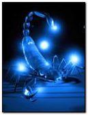 animated scorpion