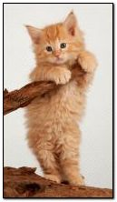 Красный котенок 360?640