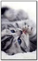 Сладкая кошка