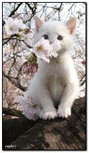 ลูกแมวสีขาว
