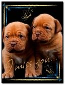 Miss you cute puppies