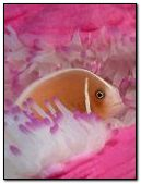 WOW ! PINK FISH < COOL
