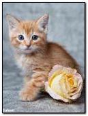 Cute kitten with a flower