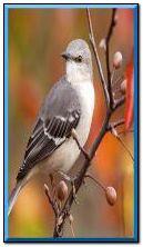 पक्षी संक्रमण ईपी