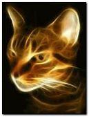 고양이 프랙탈
