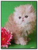 Cute kitten with flower