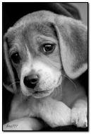 슬픈 강아지