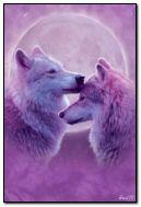 늑대 사랑