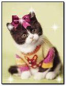 Anim Cat 2