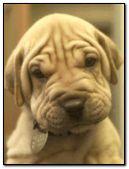Puppy:::