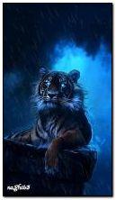 Tigre escuro