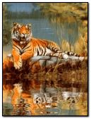 beaitiful tiger