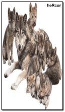 lobos 360