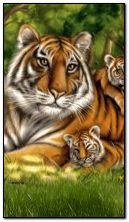 happy family of tigers