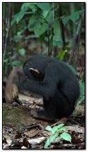 Chú khỉ nhỏ