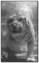 Tiger under water