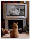 HAHA xxx CAT ! XD