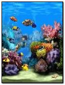 Aquarium+1+screensaver+240x320