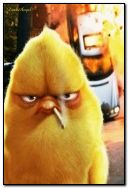 طير غاضب