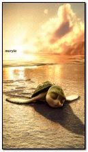 เต่าบนชายหาด
