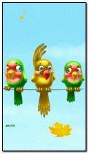 طيور مضحكة
