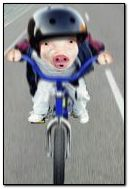Fat pig ride on bike