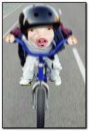 Lemak babi menunggang basikal