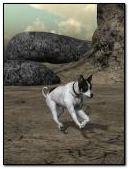 Chú chó đang chạy