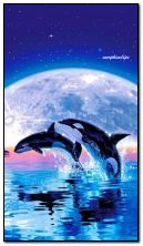 Whales by the moon