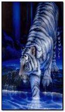 Tiger dalam air