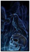 quạ và hộp sọ