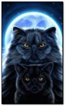 Moon cats