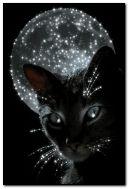 मांजर आणि चंद्र