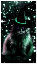 black cat wizard