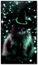 stregone gatto nero